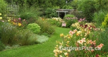 Hosta and other easy-care perennials